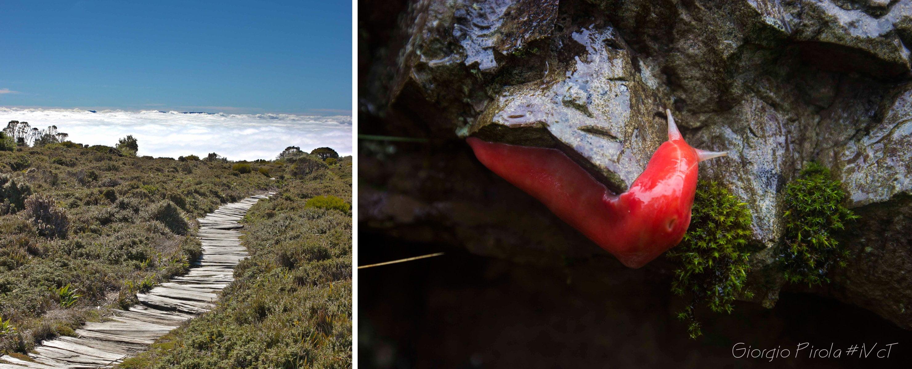 Alla scoperta dell'Australia con In Viaggio Col Tubo: hartz mountains e la lumaca rossa