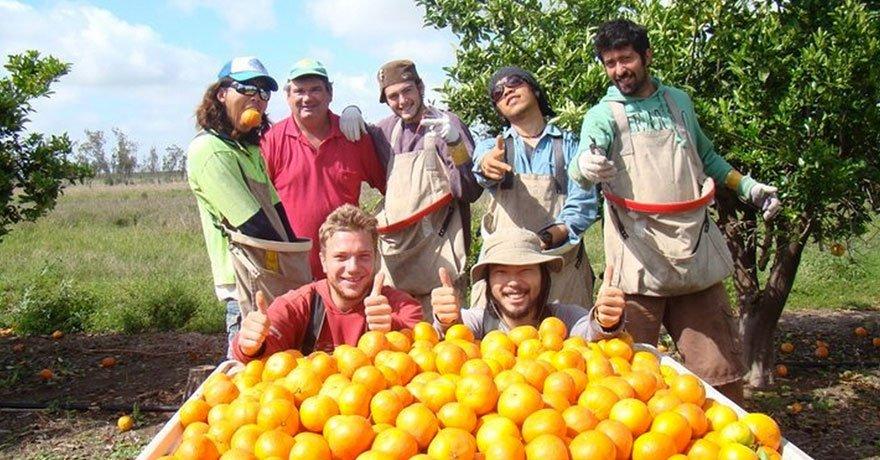 Fruit Picking Australia