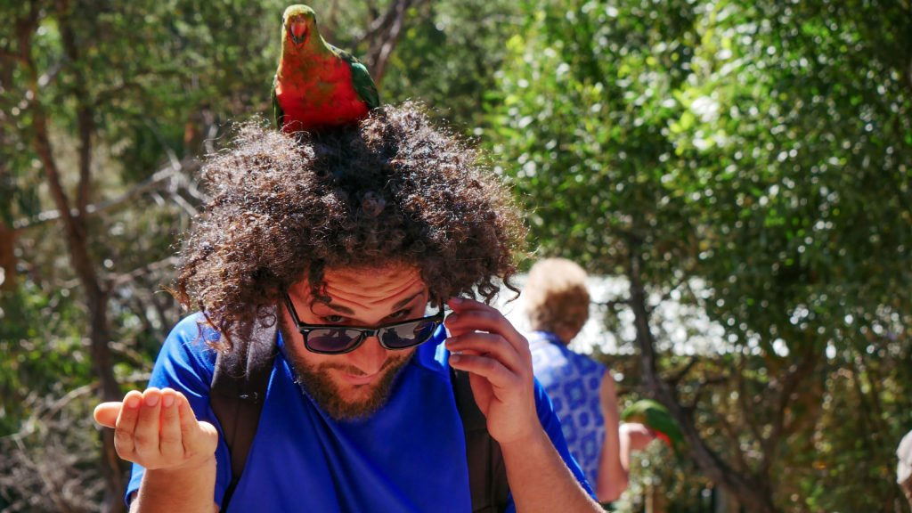 Francesco fa amicizia con un pappagallo - Positivitrip